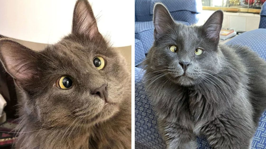 Cross Eyed Rescue Cat Raises Money For Other Shelter Animals In 2020 Animals Cats Cats And Kittens
