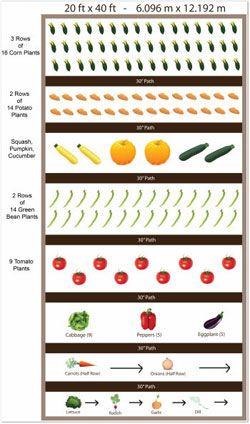 Zone Vegetable Garden Layout Design on landscape layout zone 6, garden design zone 6, vegetable garden layout georgia, winter vegetable garden zone 6,