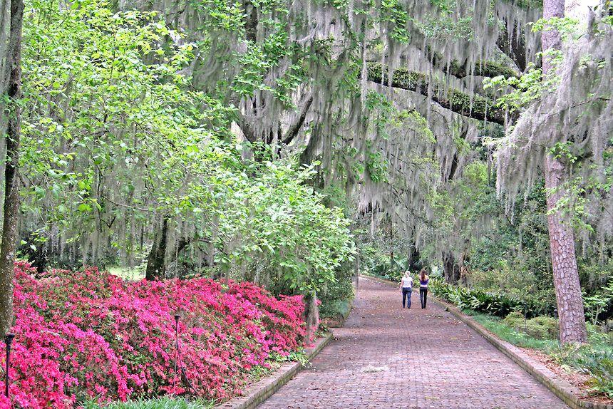 14d4593d15e85e798bb2db4a23e82b40 - Maclay Gardens State Park Tallahassee Florida
