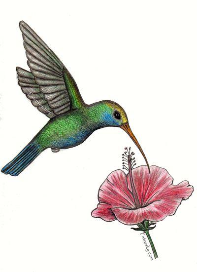 Colibri Con Flor Ilustracion Hecha A Lapiz Y Coloreada En Lapices