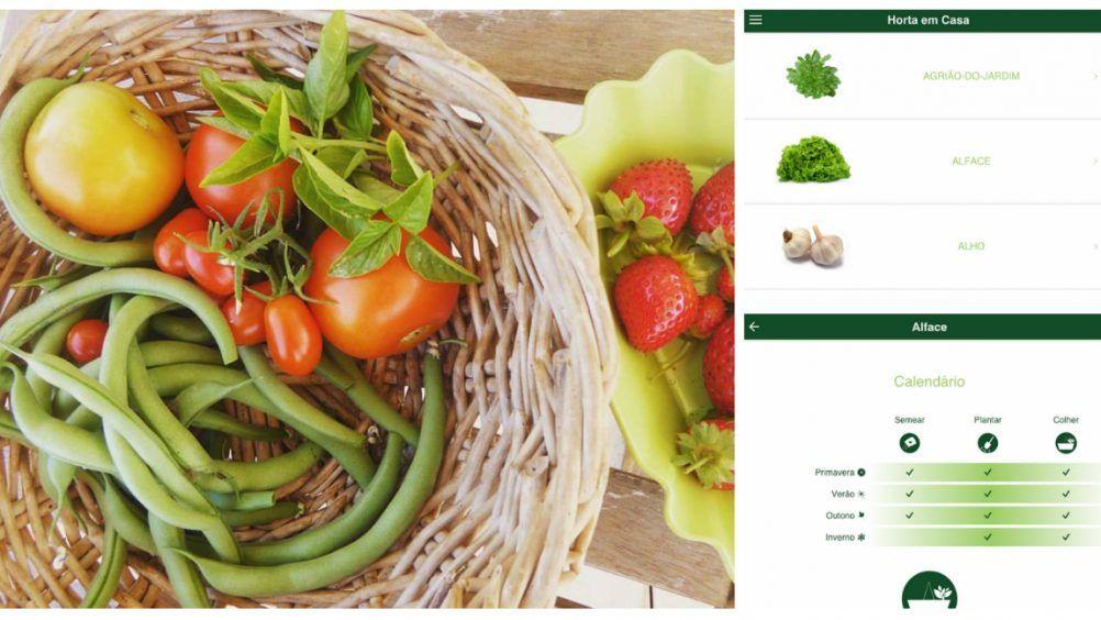 Conheça três aplicativos com informações sobre cultivo, identificação de espécies e doenças que podem atacar as plantas.