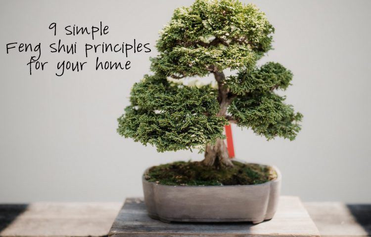 5 Feng Shui techniques for a less stressful home -   16 plants Office feng shui ideas
