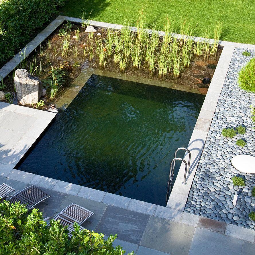 Gestaltungsideen Schwimmteich Naturpool Biopool Bilder Vongestaltungsideen Bilder Von Schwimmteich Natur Natural Pool Small Backyard Pools Swimming Pond