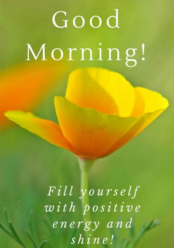 150 Unique Good Morning Quotes And Wishes Good Morning Good