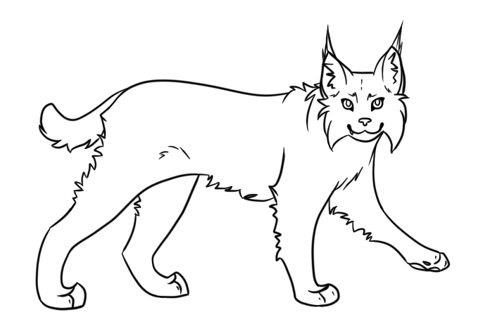 Bobcat Drawing