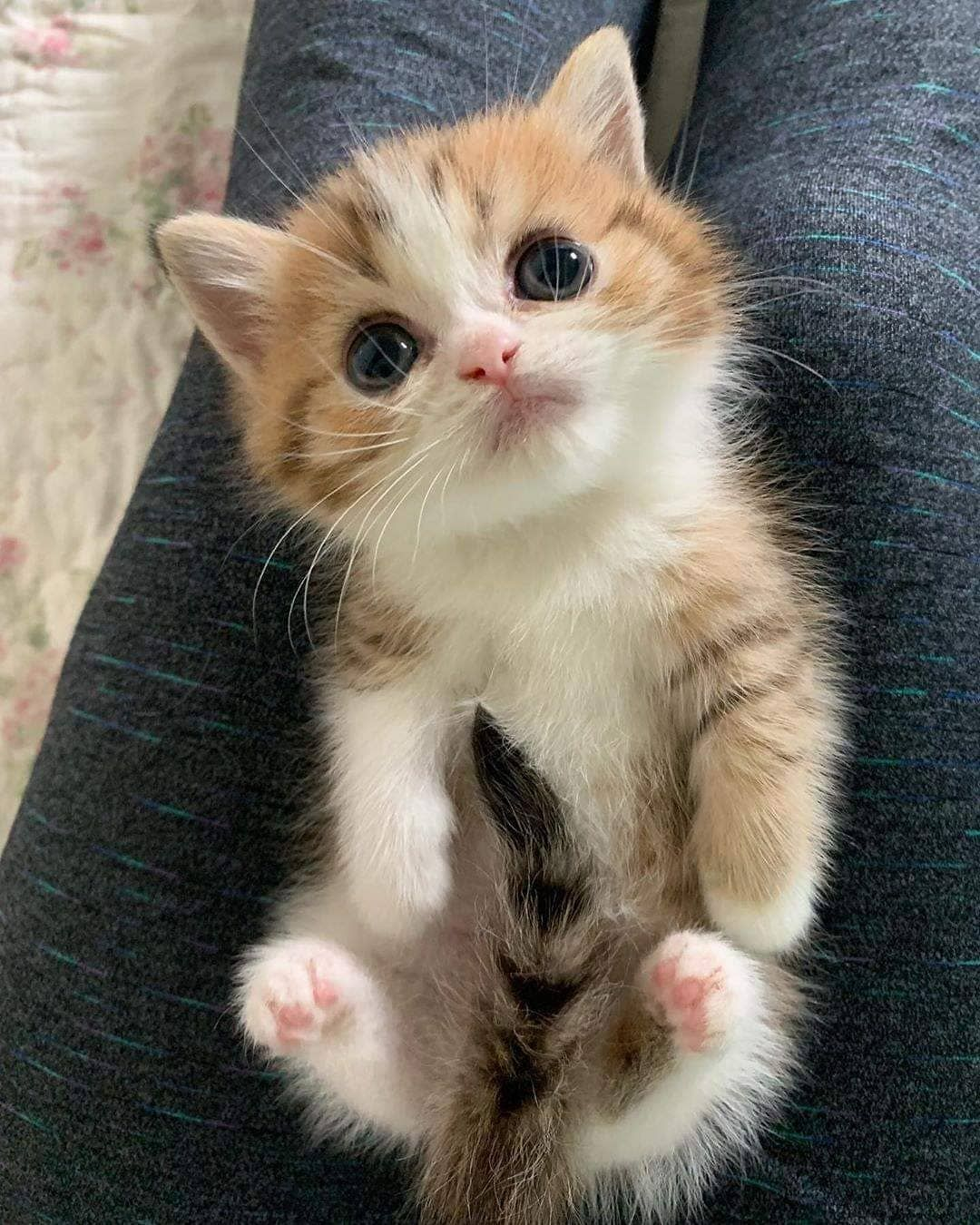 Cats Small On Instagram Cute Follow Cats Small From Unknow Thanks For You Follo In 2020 Cute Cat Gif Cute Cats And Kittens Cute Cats
