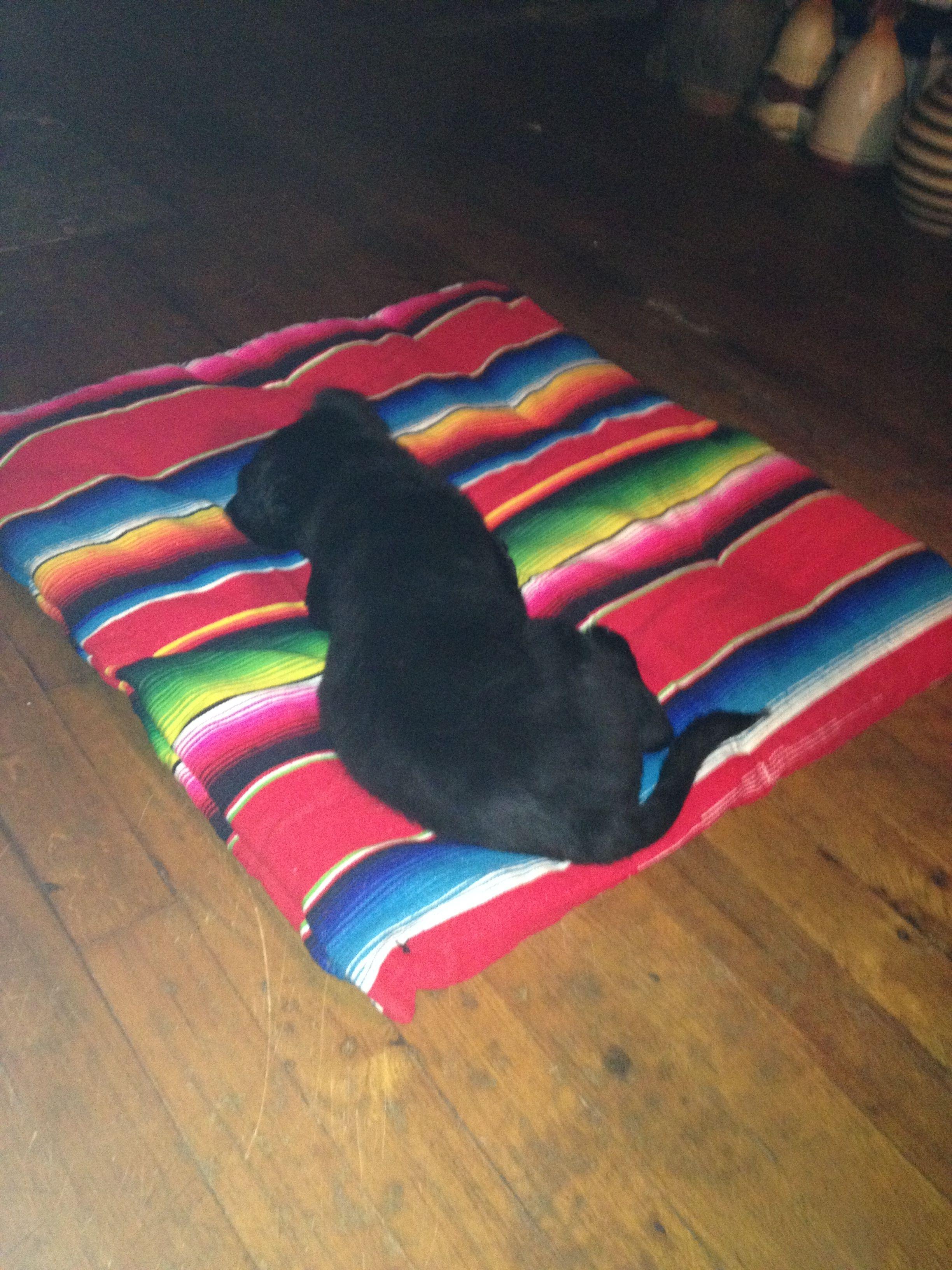 DIY Doggy bed for under 15! Dog bed, Picnic blanket