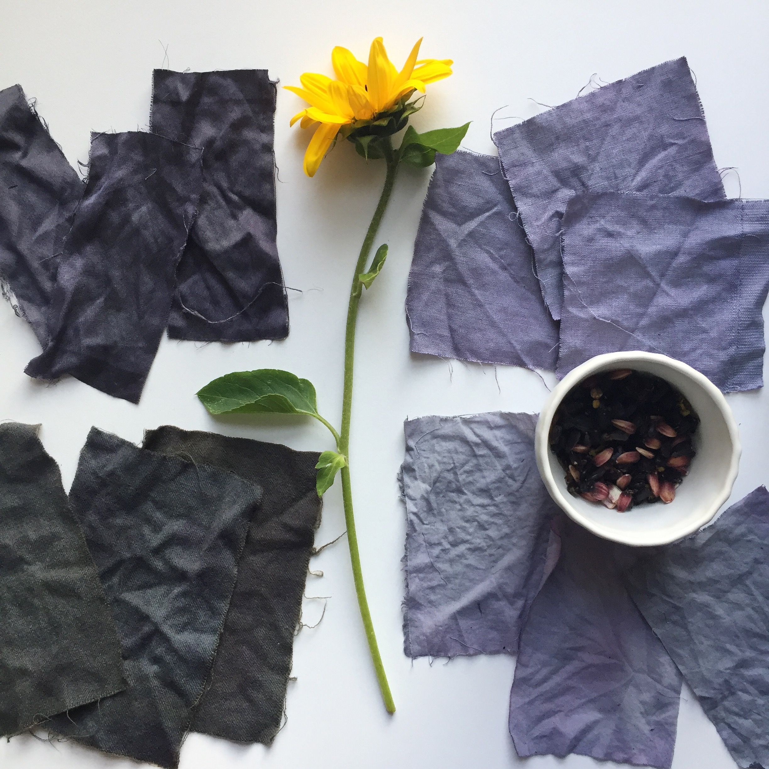 Purple And Gray Natural Dyes From Hopi Black Dye Sunflower Seeds Samples From My Recent Dye Workshop Www Ka Natural Dyes Natural Dye Fabric How To Dye Fabric