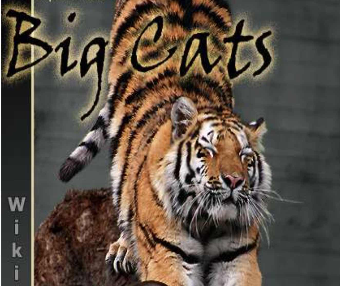 Big Cats a wiki nonfiction book for upper elementary