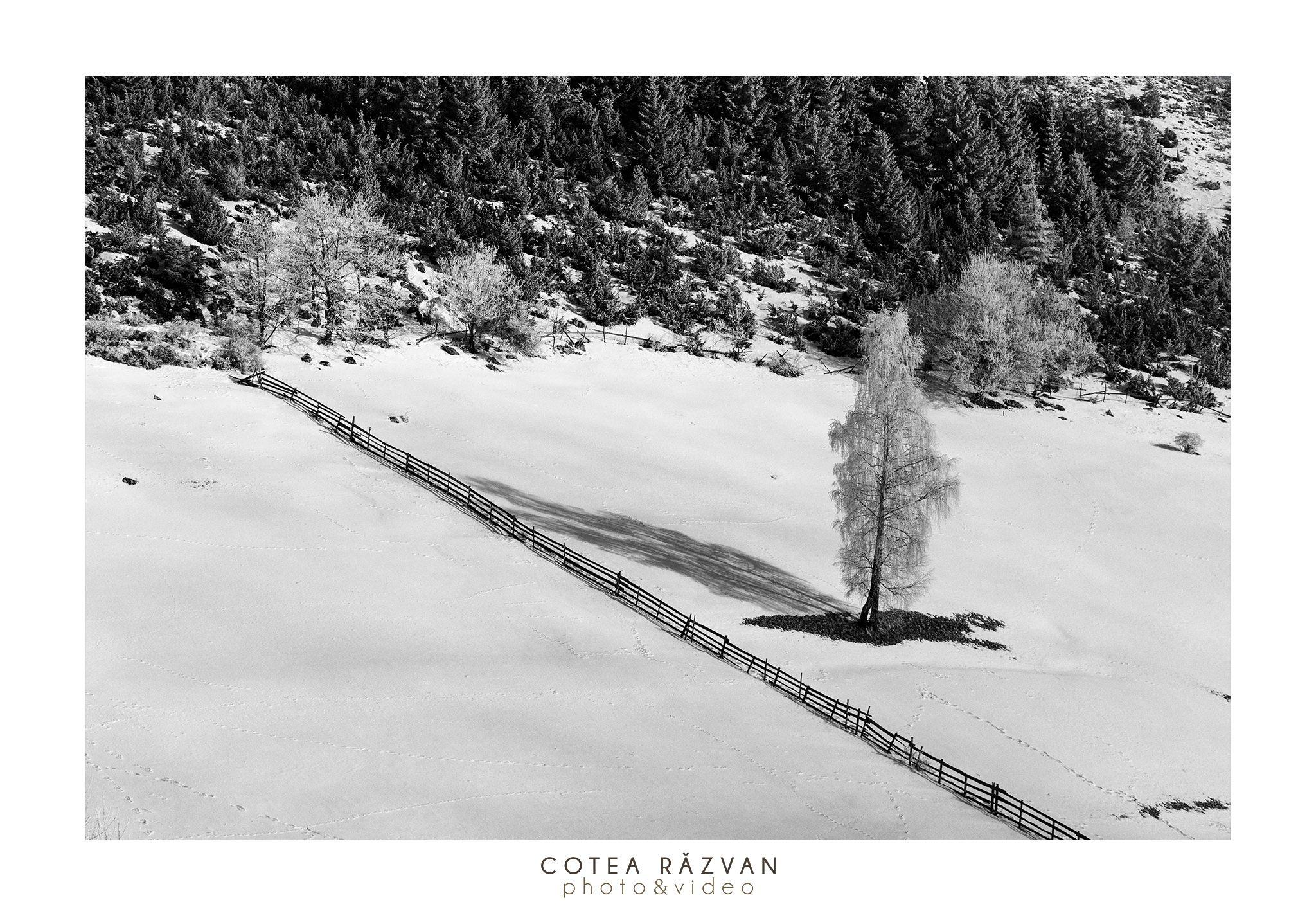 #copac #BW #photo #iarna #lamunte  https://www.facebook.com/fotonuntabucuresti/
