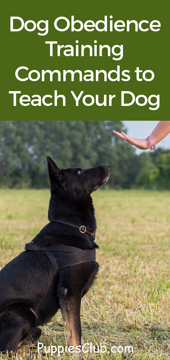 Top 10 Easy Dog Obedience Training Commands to Teach Your