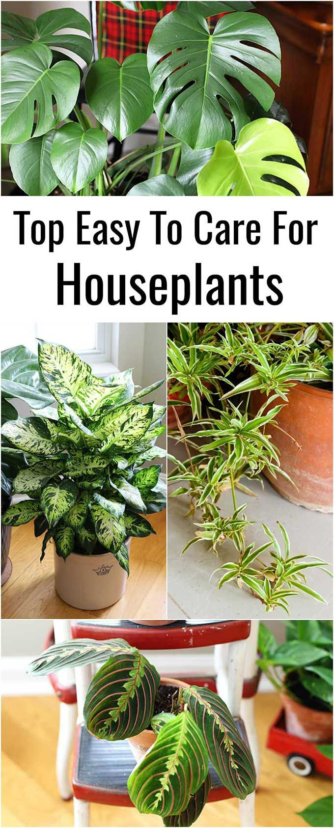 9 Easy To Care For Houseplants
