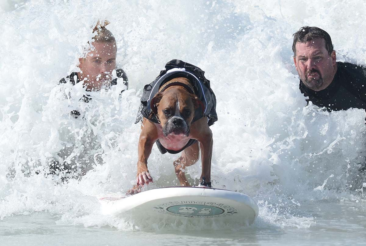 A dog's life (surfer)