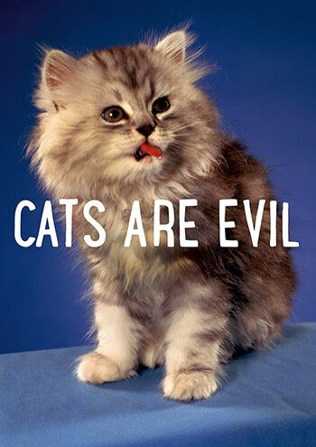Cats Are Evil Funny Birthday Card FunnyCards BirthdayCards DeanMorrisCards LOL RudeCards