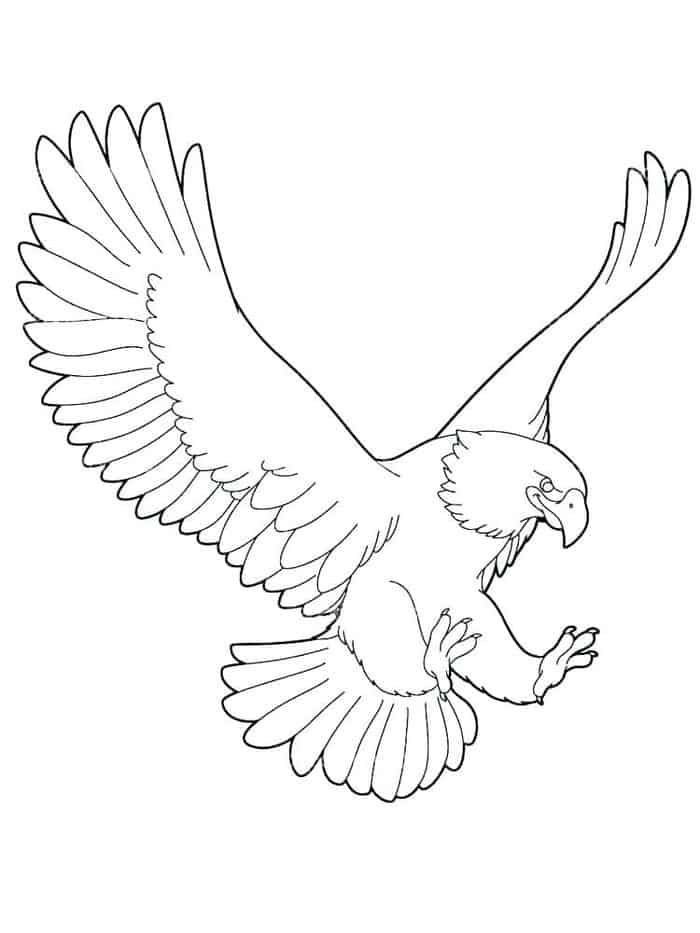 printable eagle coloring pages in   eagle drawing