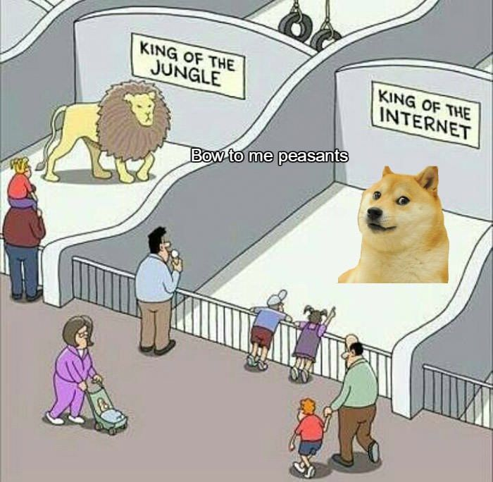 Heil Doge Cute Funny Animals Funny Memes Funny Pictures