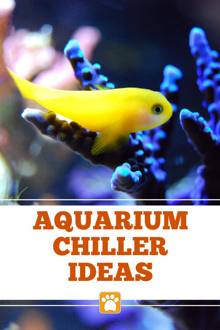 How To Cool Down A Fish Tank Cool Down Aquarium Water Temperature Fish Tank Aquarium Chiller Water Temperature