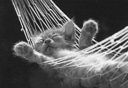 gato en hamaca una monada