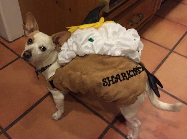 Pin On Halloween Costumes