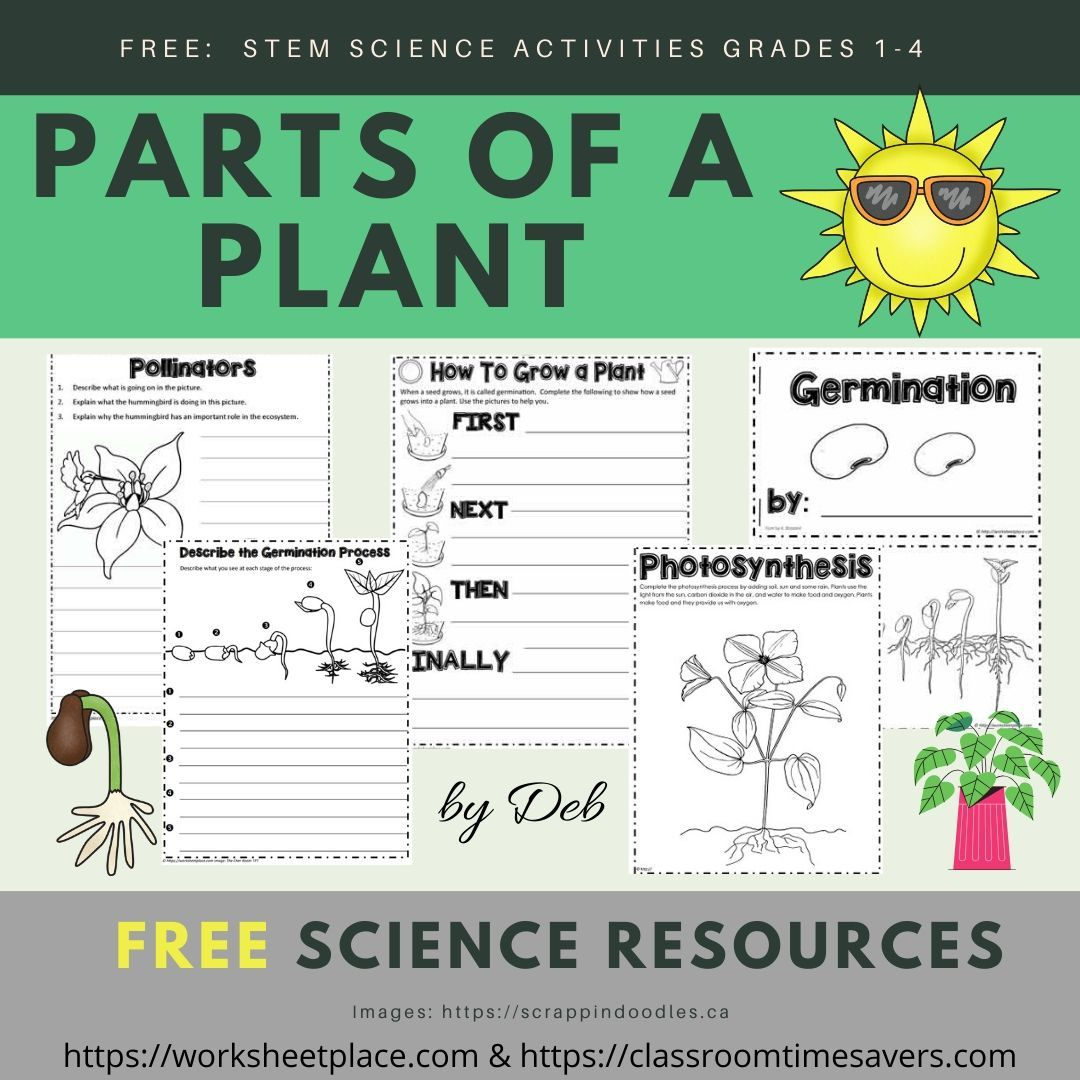 Free Pollination Worksheets   Printable Worksheets and Activities for  Teachers [ 1080 x 1080 Pixel ]