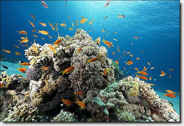 Coral Reef One Piece Peel Stick Canvas Wall Mural Mural Wall Murals Wall Canvas