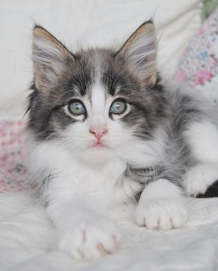 Cute Sea Animals Gif Cute Kittens Hd Beneath Cute Pictures Of Newborn Kittens And Cute Cat Names Beginning With R Cute Cats Cat Pics Cats And Kittens