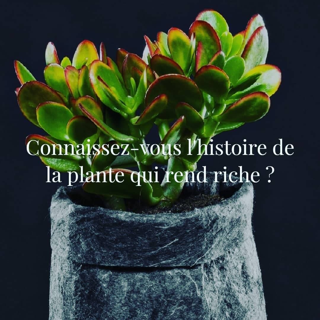 Mardis Verts La Plante Qui Rend Riche Il Etait Une Fois L