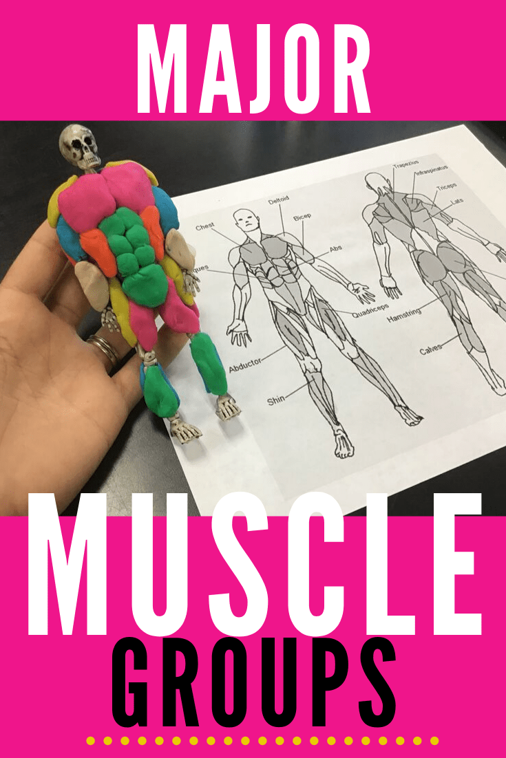 Skeletons, Play Doh and Muscle Groups! High school