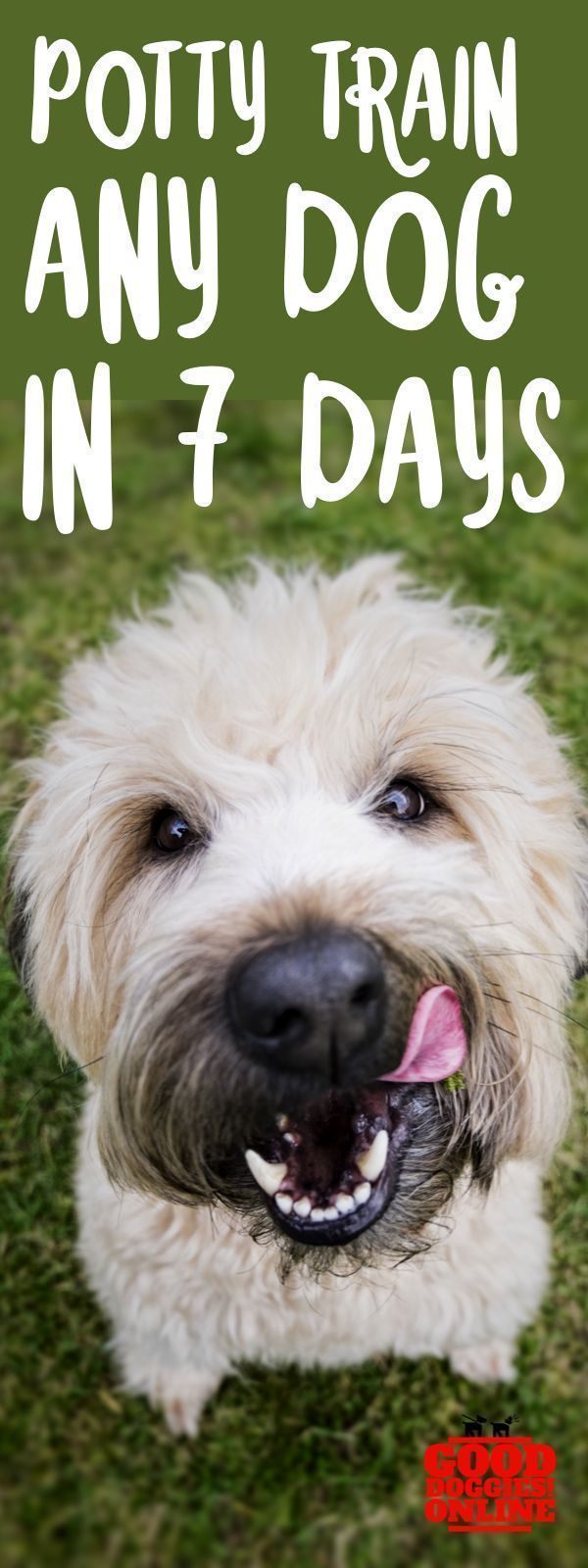 7 Tips For Potty Training Older Dogs Potty Train Older