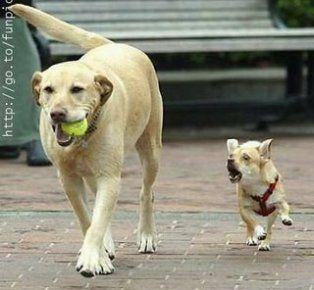 ball-back