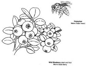 Image result for maine state symbols coloring pages for Blueberries for sal coloring page