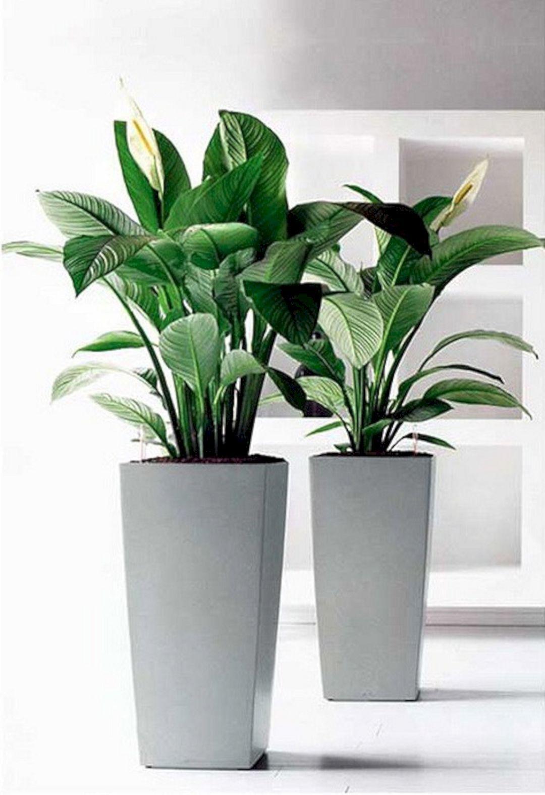 24 Easy Indoor Herb Garden For Beginners Office Plants 400 x 300