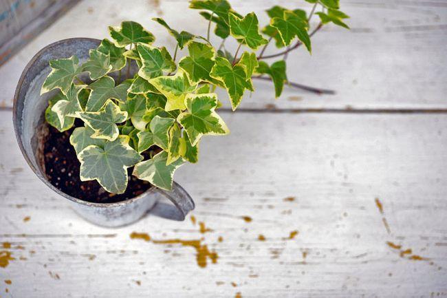 Endlich gut schlafen Diese Pflanze solltest du ins
