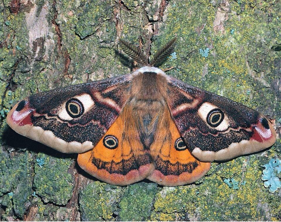 Butterfly 蛾 蝶 虫