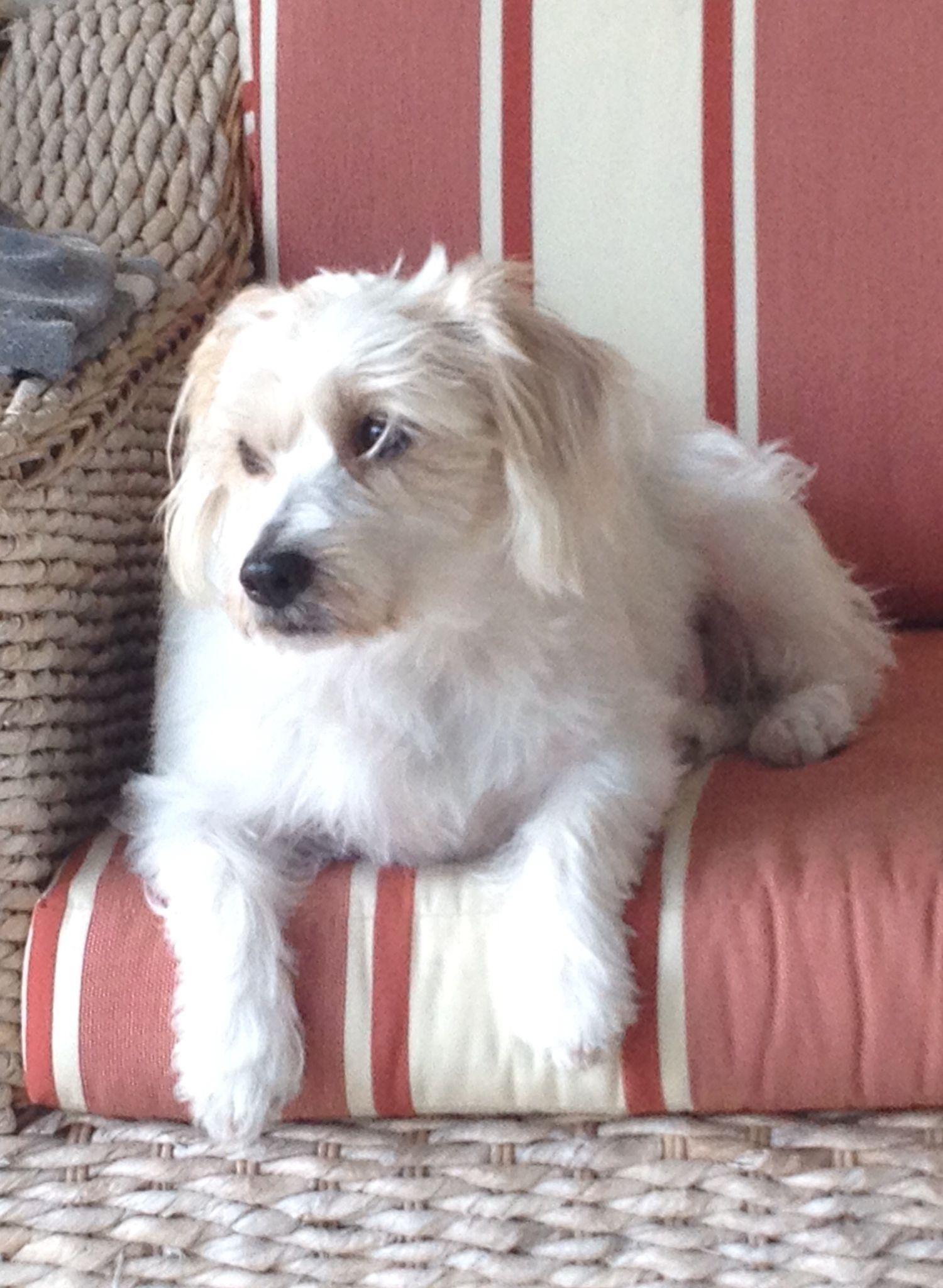 My dog Tache
