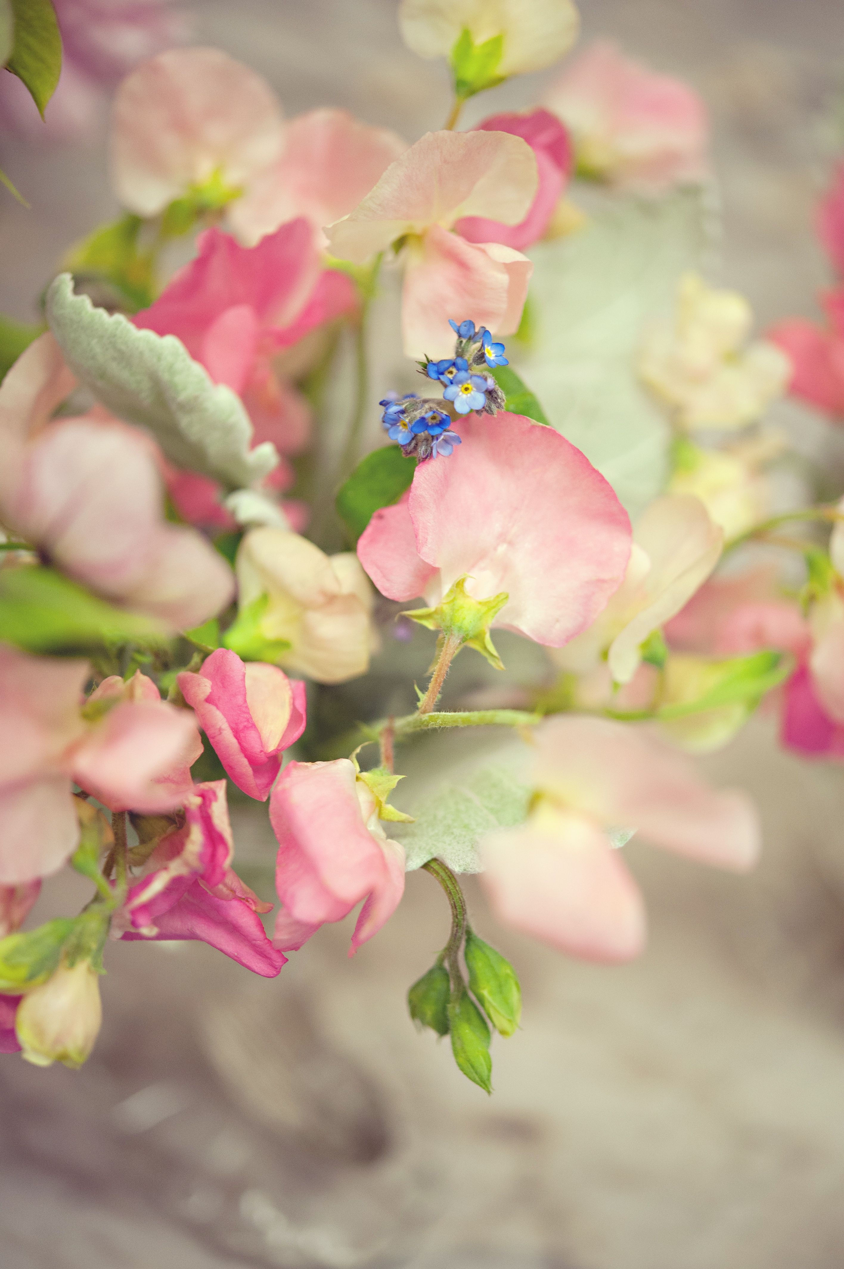 Sweetie pie sweet pea and unforgettable forget me nots.. with Anne Liles Photography.