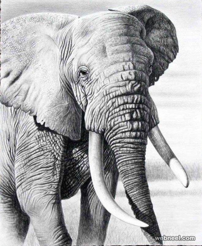 25 Beautiful And Realistic Animal Drawings Around The World With