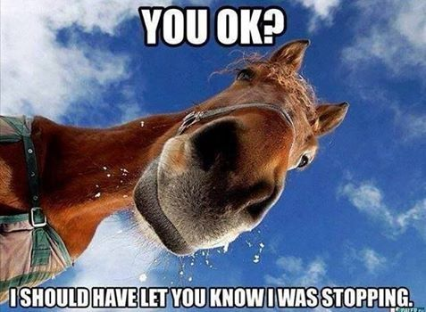 14e323b4b90968ae85334ba12435989b you ok funny memes animals horse meme lol funny quotes cute humor