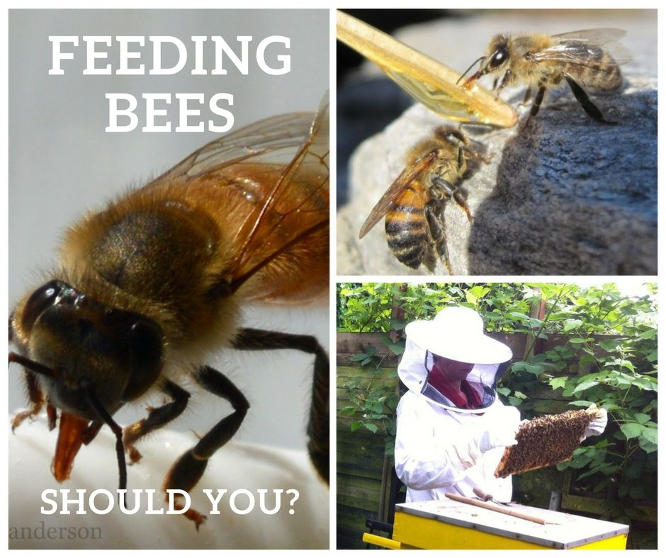 Feeding Bees Sugar Water How Why Feeding Bees Bee Sugar Water For Bees