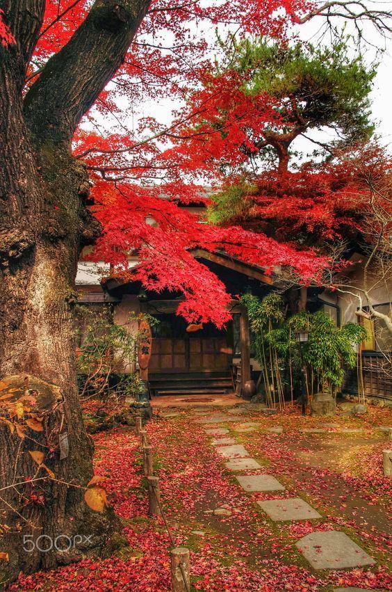 "silvaris:  ""Autumn color 2, entrance… by Koki Kondo """