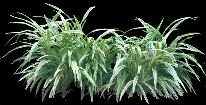 Tropical plant pictures shrubs rboles pinterest for Vegetacion ornamental
