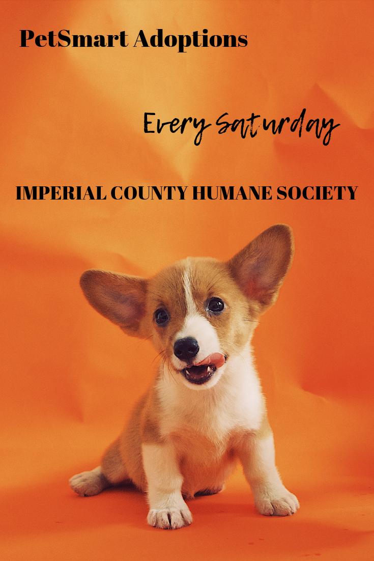 PetSmart Adoptions Puppy biting, Dog books, Pet day
