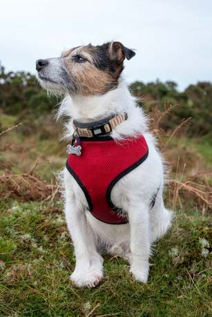 32 Best No Pull Harnesses For Dogs That Pull A Lot Dog Harness
