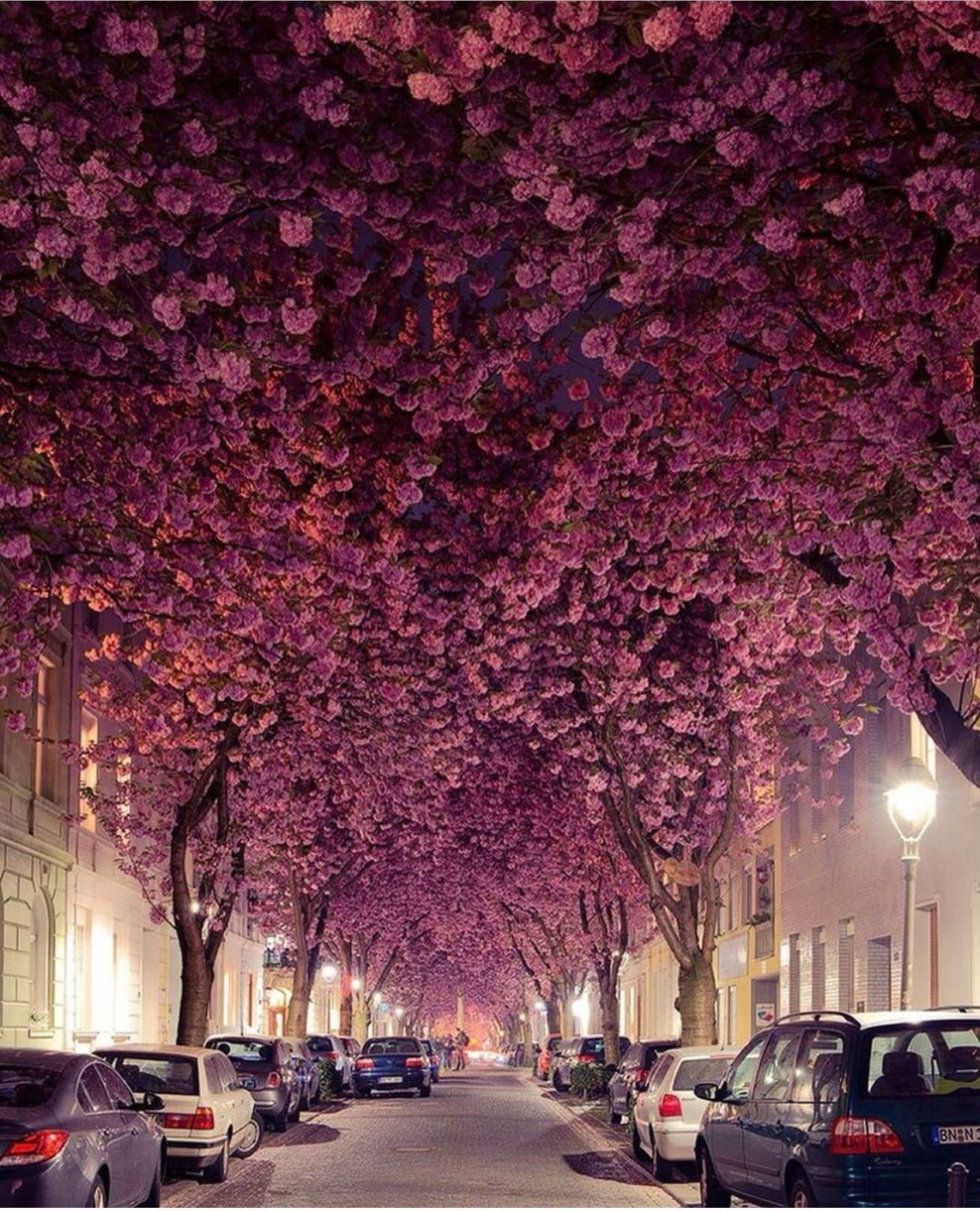Cherry Blossom St In Bonn Germany Bonn Germany Beautiful Places To Visit Most Beautiful Places