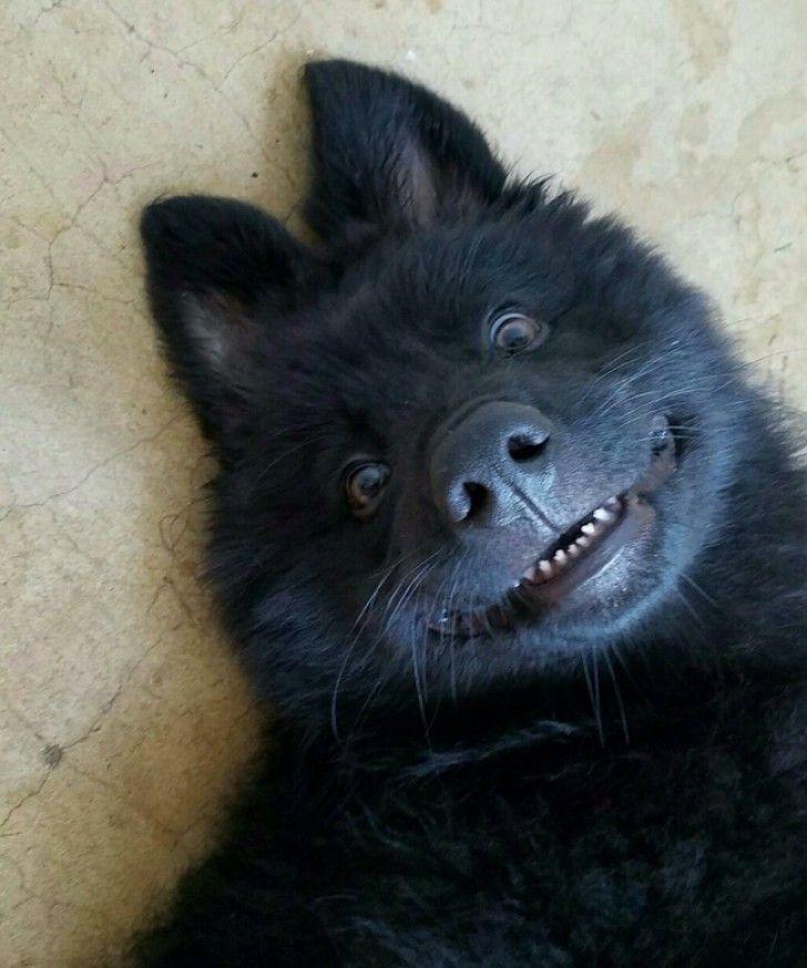 23 lustige Fotos, die zeigen, dass Tiere nichts als