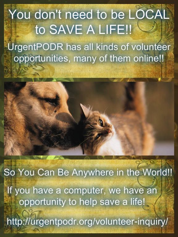It S 6pm Please Start Sharing Nyc S Death Row Cats Cats And Kittens Kitten Adoption Cat Adoption