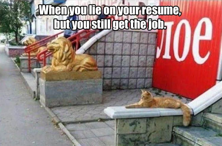 When You Lie On Your Resume But Still Get The Job Funny Pictures Funny Crazy Cats