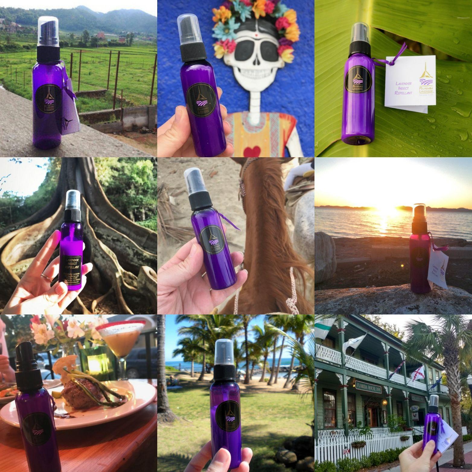Pelindaba Lavender AllNatural Lavender Insect Repellant