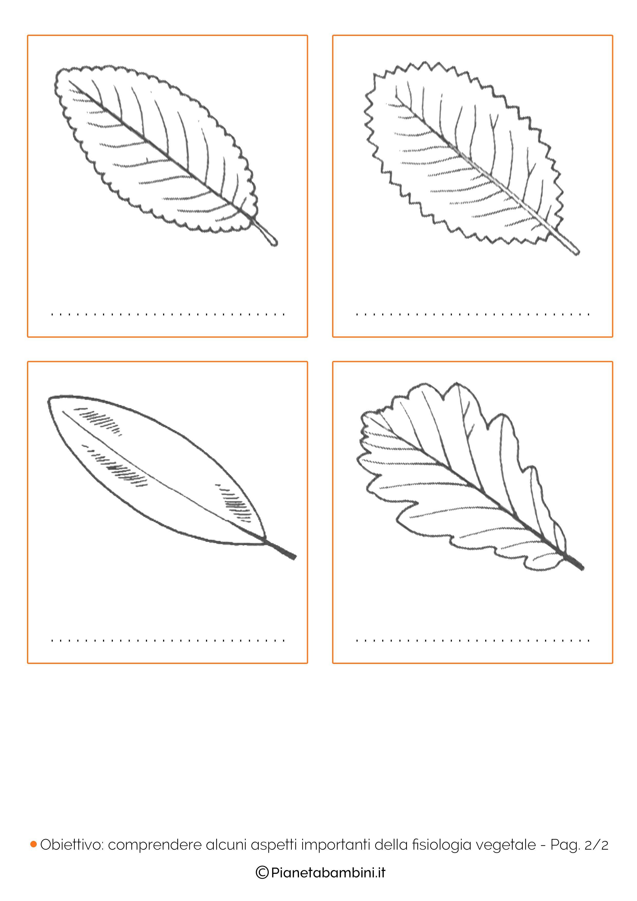 Tipi Di Piante Sempreverdi classificazione delle foglie: schede didattiche da stampare