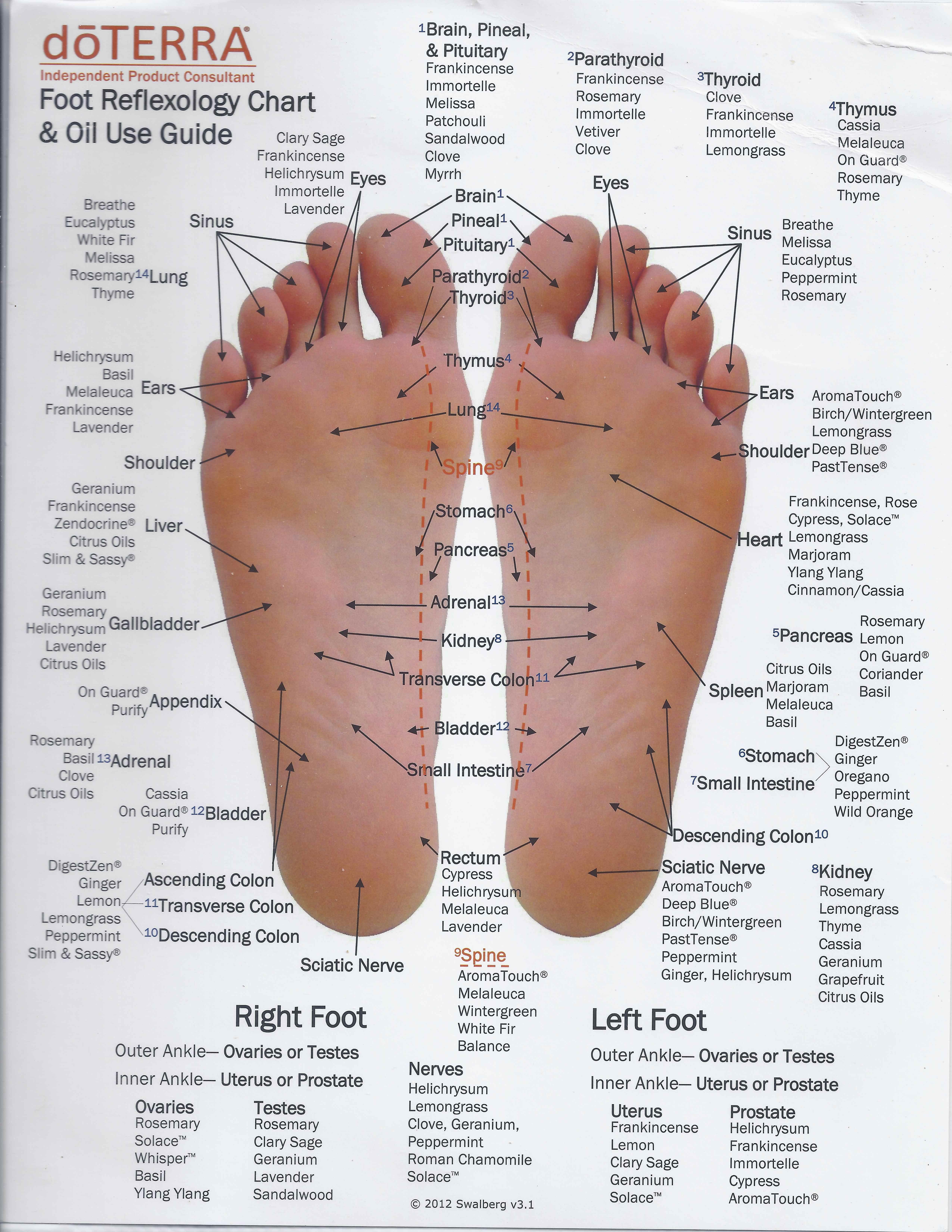Doterra essential oils foot reflexology chart mydoterra maryhart also rh pinterest